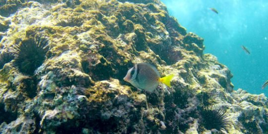 Marietas Islands Snorkel
