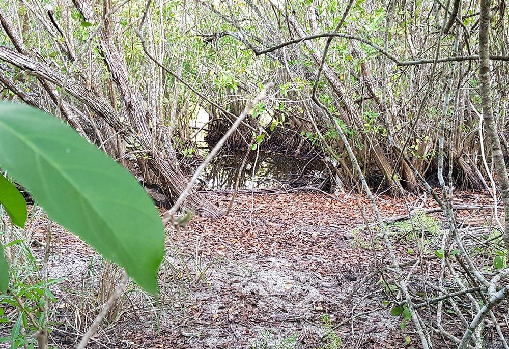 mangrove la lancha