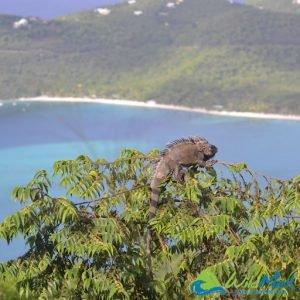 Places like Sayulita? San Pancho! Famous for its iguanas...